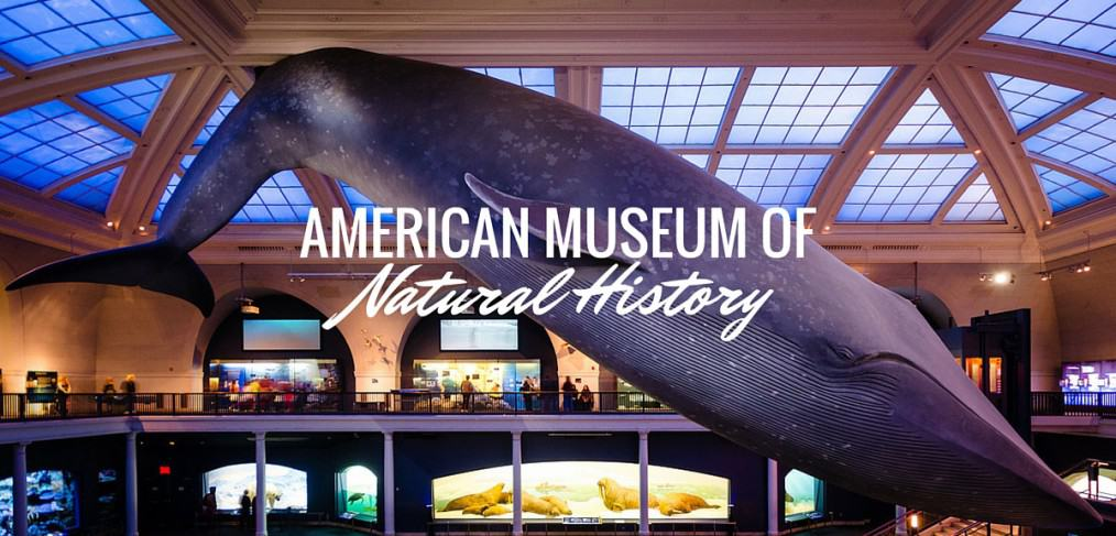 American Museum of Natural History Blue Whale