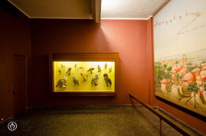 natural-history-museum-2