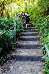 1000 Steps Kokoda Track Memorial Walk