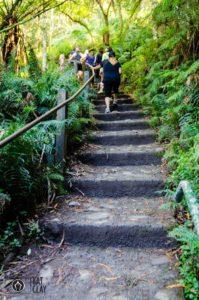 1000 Steps Kokoda Track Memorial Walk
