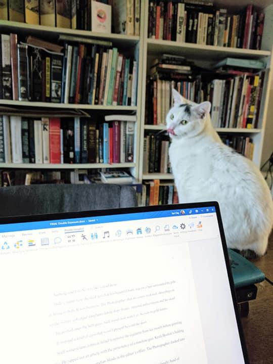 Cat sticks its tongue out at computer